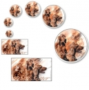 Aufkleber Irish Red Setter 1