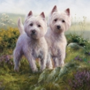 Puzzle West Highland White Terrier Highland Heather