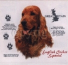 Motiv English Cocker Spaniel 4